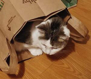 brown and white tabby cat pokes her head out of brown grocery bag to look around